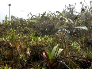 Natürliches Habitat